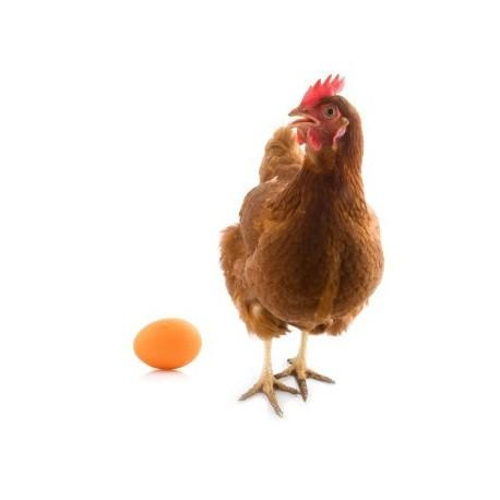 purina-®-furaj-combinat-extra-găini-ouătoare